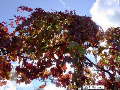 20060716102404-la-parra-ii-boya-im003487.jpg