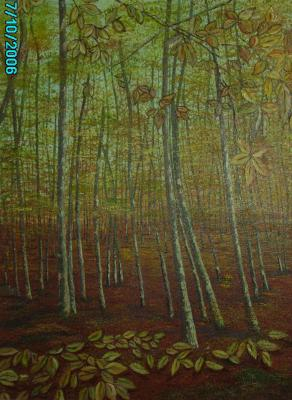 20070219082806-bosque.jpg